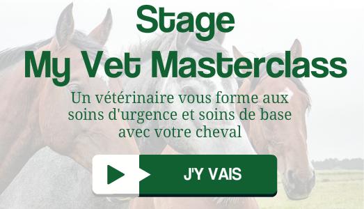 Stage en présenteil SOINS D'URGENCE avec un vétérinaire