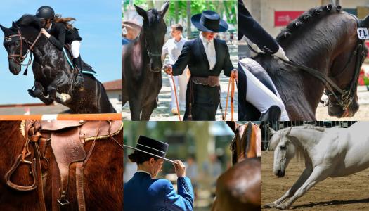 Les masterclass pour mon cheval : les soins, ce qu'il est, son mode de vie, les races, l'élevage, etc.