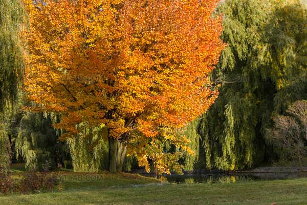 Autumn Luminosity