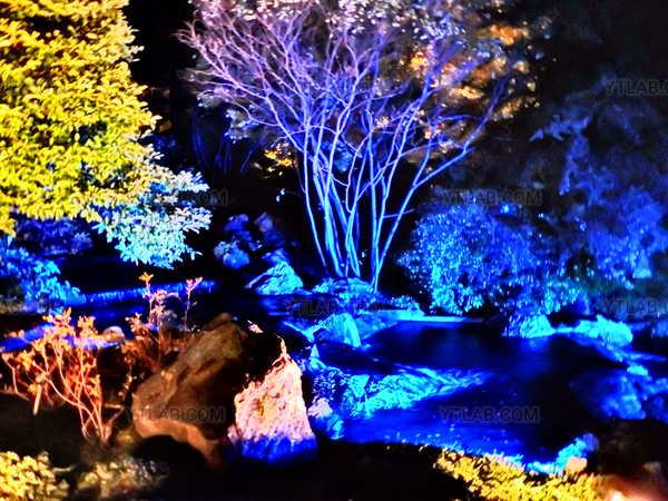 Forêt Mystique