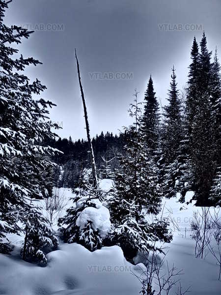 Snow on the Woods