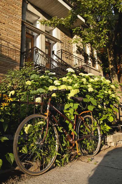 Neighbourhood (bicycle)
