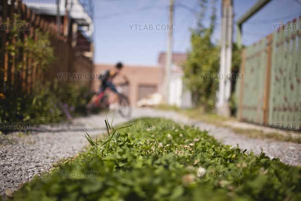 Nature en milieu urbain (3) Ruelle Verte