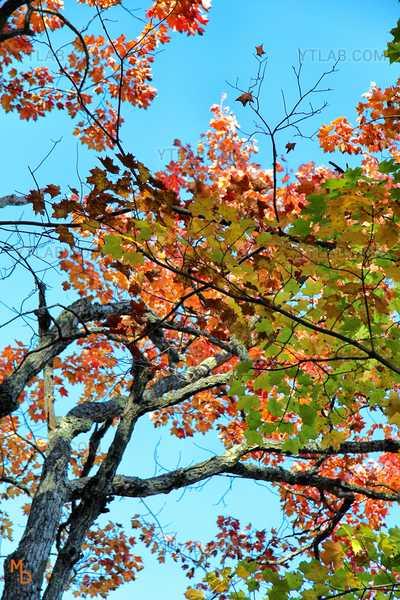 Fall's leafs 2