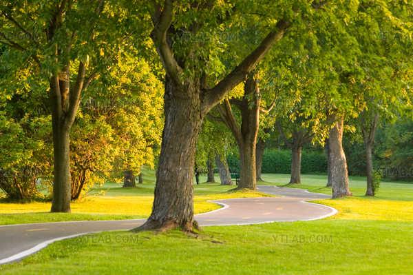 Calme au parc