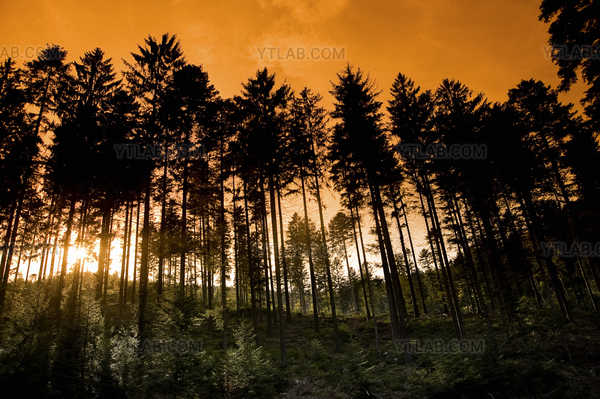 The Forest of Vosges