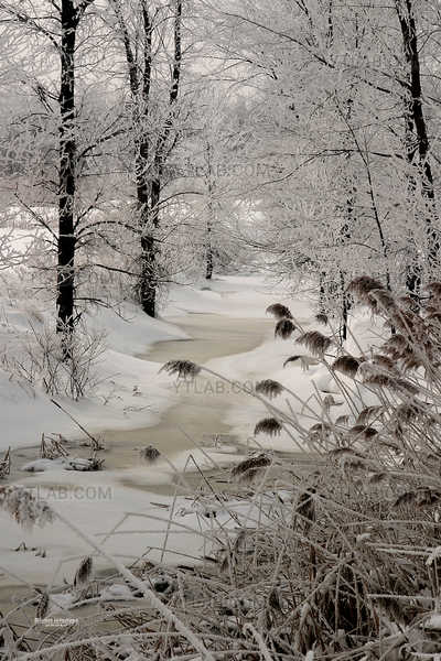 Scène hivernale 01