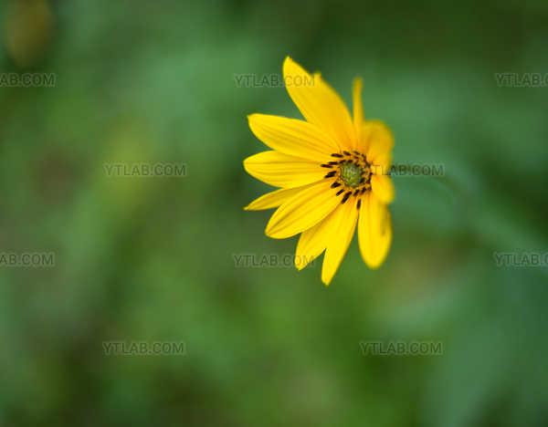 Accueil floral