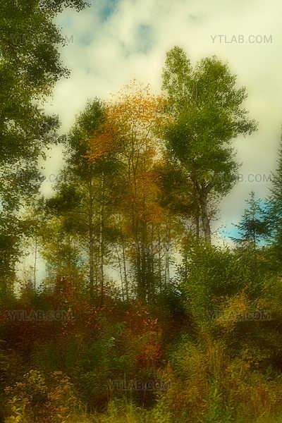 Scene d'automne