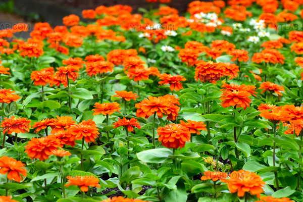 Foule florale