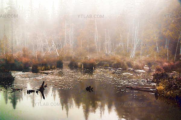 Brume automnale sur l'étang