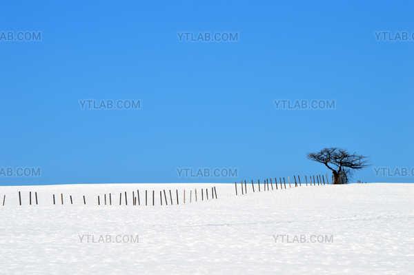 Arbre et clôture en hiver