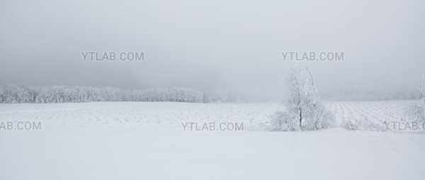 Horizon blanc