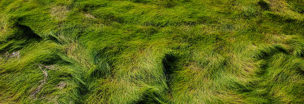 Acadian salt water marsh