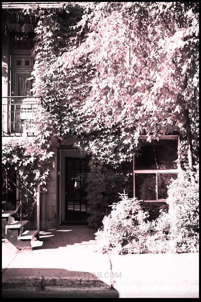 Sur le Plateau - La Vie en Rose - 06 (série de 11 clichés)