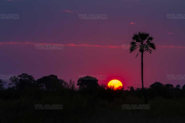 Coucher de soleil dans le delta de l'Okavango