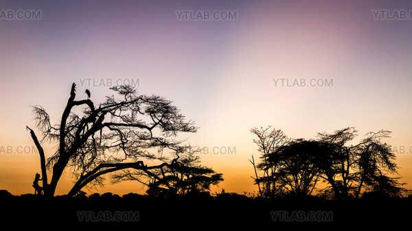 Marabout au lever du jour