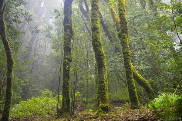 Larissilva Forest