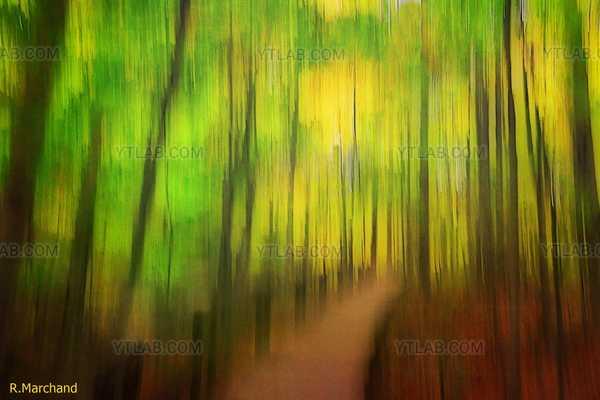 Douce forêt