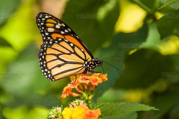 Festin de nectare