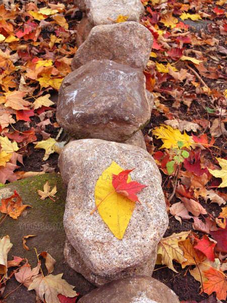 Feuilles d'automne sur les rochers