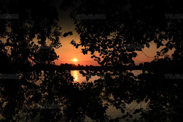 Splendor through the branches