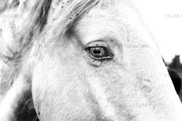 Blanche's eye