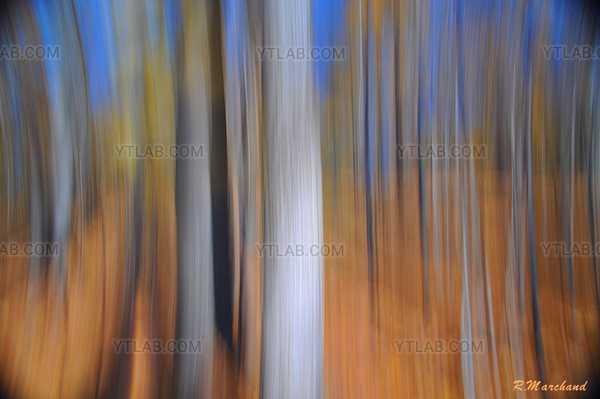 forêt abstraite.