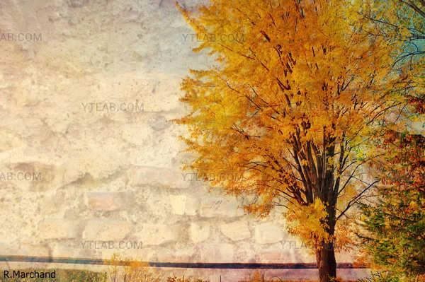 automne en ville