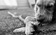 26173_dog_with_a_stick_microsoft