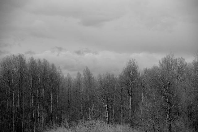 snowytrees_johnrockefellerjrprkwy_blotto_8890_1.jpg