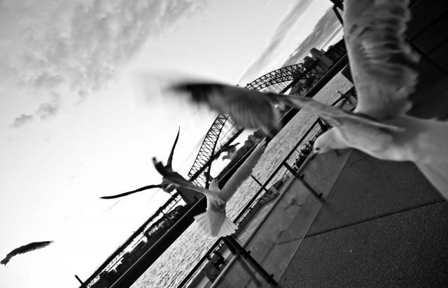 sydneyharbour_aug2011_blotto_9659_1.jpg