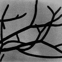 John H. Brown Jr., Untitled, framed:  16 x 16 in.  (40.6 x 40.6 cm); image:  5 x 5 in.  (12.7 x 12.7 cm), Courtesy of the artist and Hemphill Fine Arts, Washington, D.C.