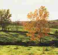 Cathy Martin, The Pasture (September in Wisconsin), Overall: 13 × 33in. (33 × 83.8cm), Courtesy of the artist and Tory Folliard Gallery, Milkwaukee, Wisonsin