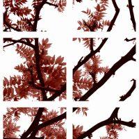 John H. Brown Jr., Fall, from The Vine Series, Framed: 54 x 36 in. (137.2 x 91.4 cm), Courtesy of the artist, Alexandria, Virginia