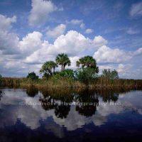 David Muench, Florida Everglades, Color Photograph, Overall: 26 x 22in. (66 x 55.9cm), Courtesy of the artist, Santa Barbara, California