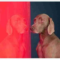 William Wegman, View Points, Pigment print, unframed: 36 x 44in. (91.4 x 111.8cm), Gift of the artist to the Foundation for Art and Preservation in Embassies, Washington, D.C.