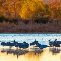 Bill Wright, Bosque del Apache, Overall: 16 × 24in. (40.6 × 61cm), Courtesy of the artist, Abilene, Texas