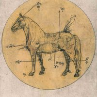 Angelbert Metoyer, Horse, from the series: Zodiac Study, 11 x 14 in.  (27.9 x 35.6 cm), Courtesy of the artist and ACE Collection