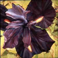 Valerie Watson, Dark Iris, Framed:  46 x 46 in.  (116.8 x 116.8 cm); image:  30 x 30 in.  (76.2 x 76.2 cm), Courtesy of the artist, Cheverly, Maryland