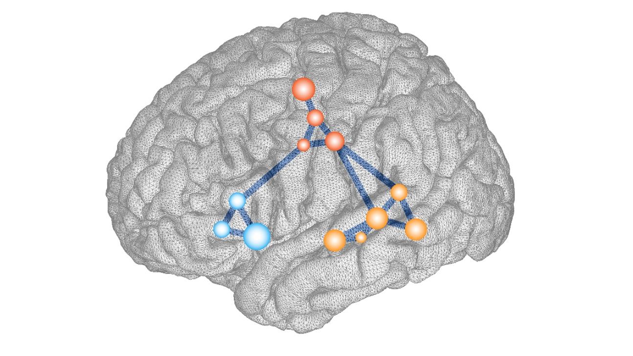 Illustration of the left hemisphere of the brain.