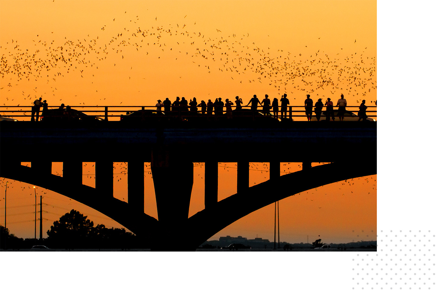 A crowd watching the bats fly on the South Congress Bridge.