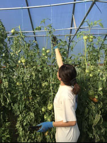 Carol Pérez, WSU online MBA student, working in garden