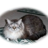 Cat Vet Rocklin Roseville Lincoln