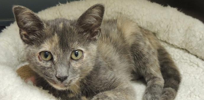 kitten kitty cat needs home adopt homeless stray