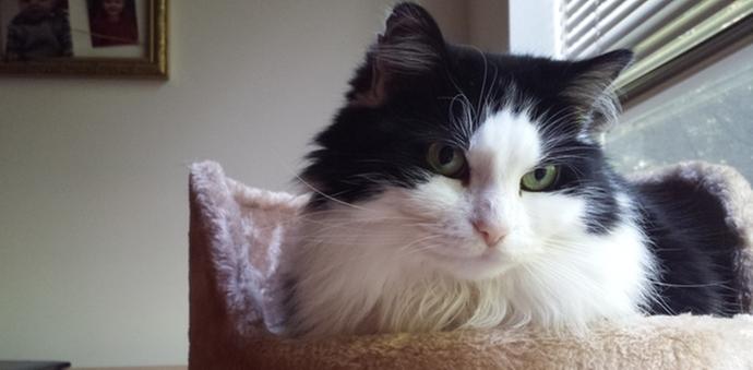 kitten energy cat season adopt foster stray
