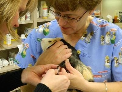Exotic Pet Care