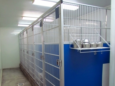 Inside Kennel Area