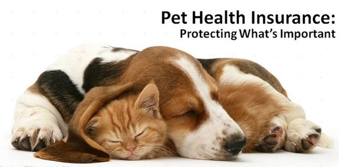 September Banner - Pet Insurance
