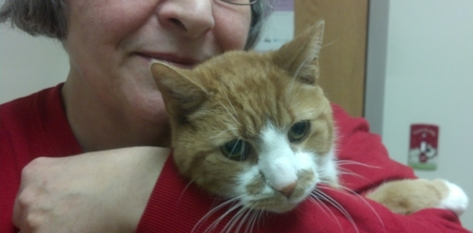 cat patient of compassion veterinary feline health